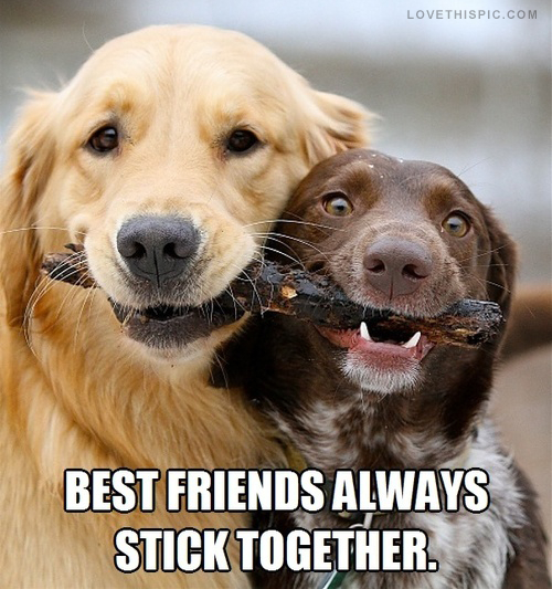 best_friends_always_stick_together