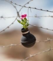 West-Bank-garden-of-tear-gas-grenades--537x357